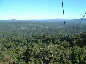 熱帯雨林の上を通るゴンドラ、スカイレール