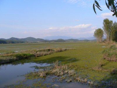 わかりにくいですが、手前から奥の、緑に見えるところは全部、沼です。