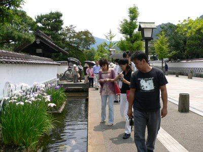 鯉と菖蒲がキレイな津和野。観光客がたくさん。