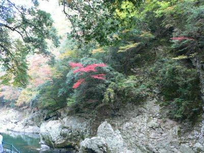 長門峡の紅葉橋から見た紅葉